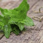 tips for growing mint