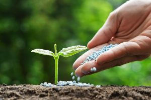 8 tips for plant care