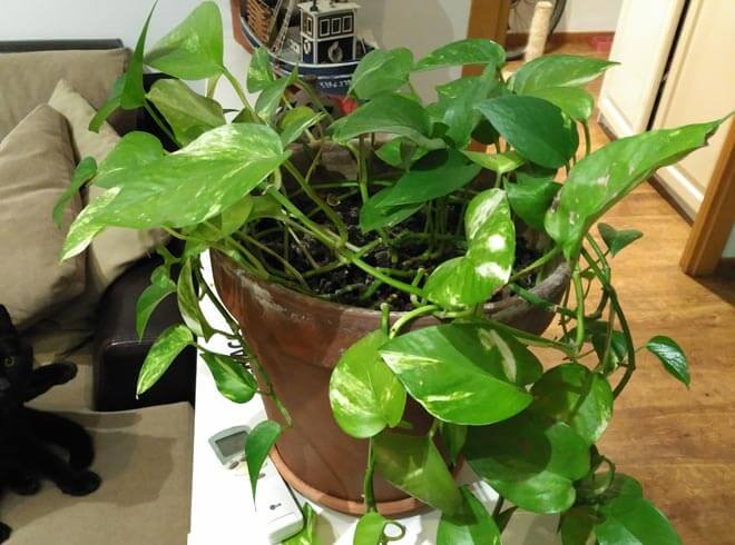 How to take care of the potted plant in home