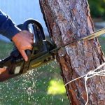 How much should I expect to pay for tree removal?