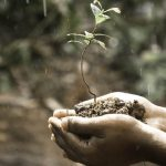 Why plants look healthy but not growing